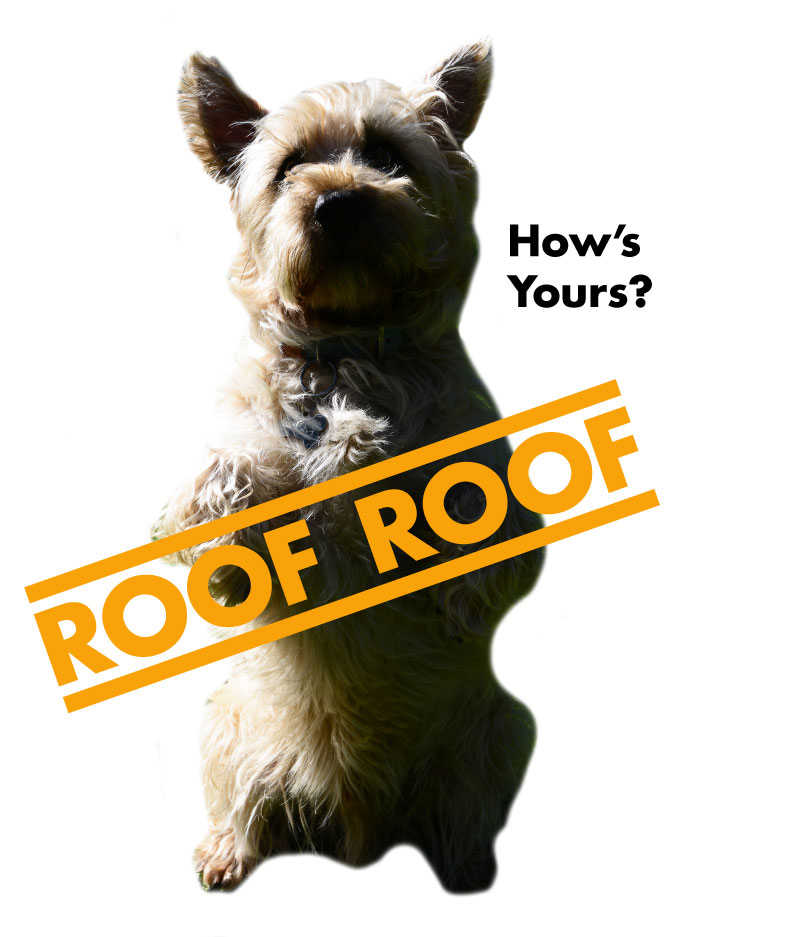 Rocky the Renown Roofing dog